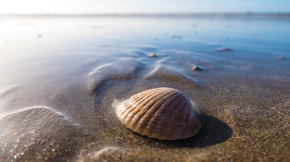 shell-pixabay