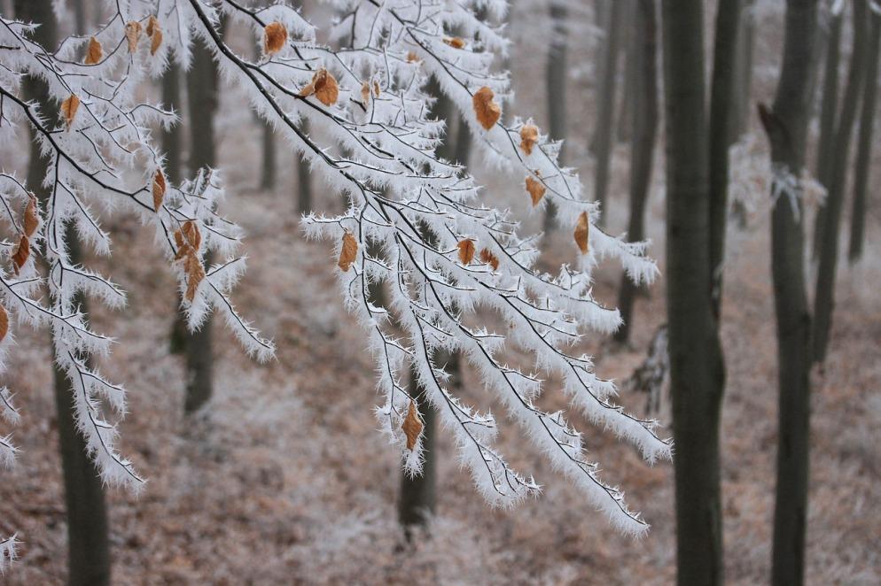 snow branch pixabay.jpg
