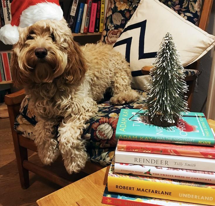 Bookshop Dog